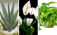 5 loại cây trồng trong nhà tốt cho sức khỏe