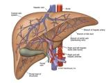 Làm sao để phát hiện sớm ung thư gan ?