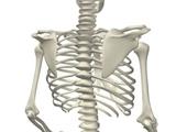 Thực phẩm cho xương chắc khỏe mỗi ngày